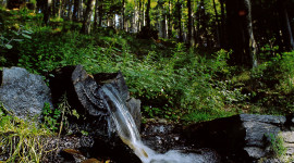 Waldführungen